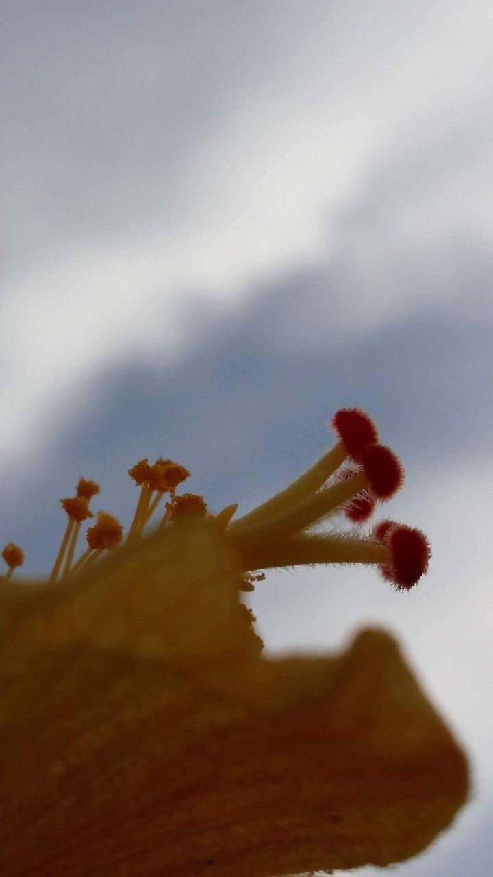 nature, no people, outdoors, growth, day, close-up, beauty in nature, fragility, sky