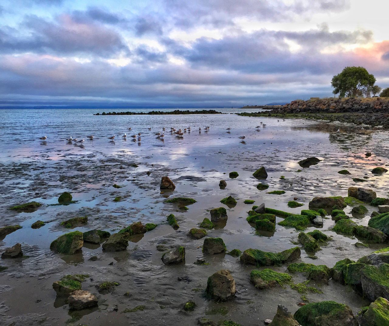 Taken last week when I managed to get out of the house for a few minutes to see the sunset. Sunset Beach Low Tide Alameda Purple Sky Rocks Rocky Deserted
