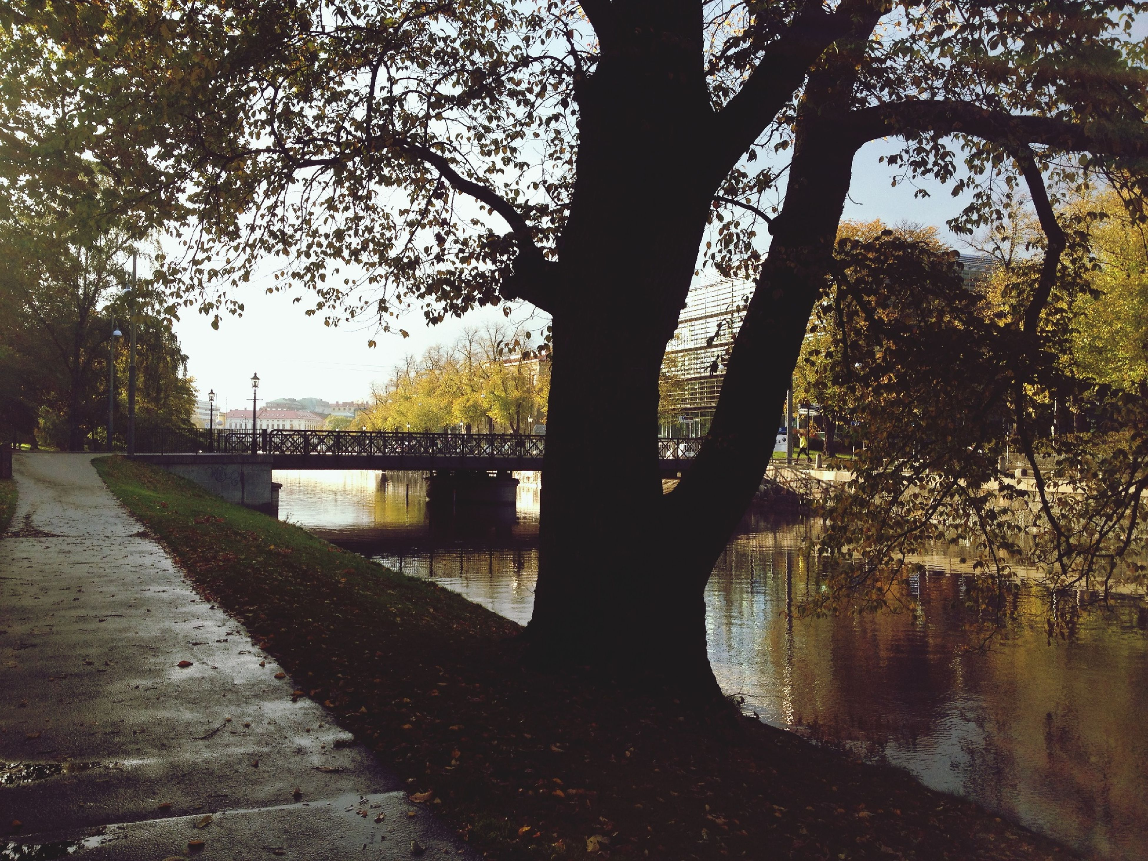 tree, water, reflection, tranquility, river, branch, lake, tree trunk, tranquil scene, nature, scenics, beauty in nature, sky, growth, outdoors, day, bare tree, silhouette, bridge - man made structure, park - man made space