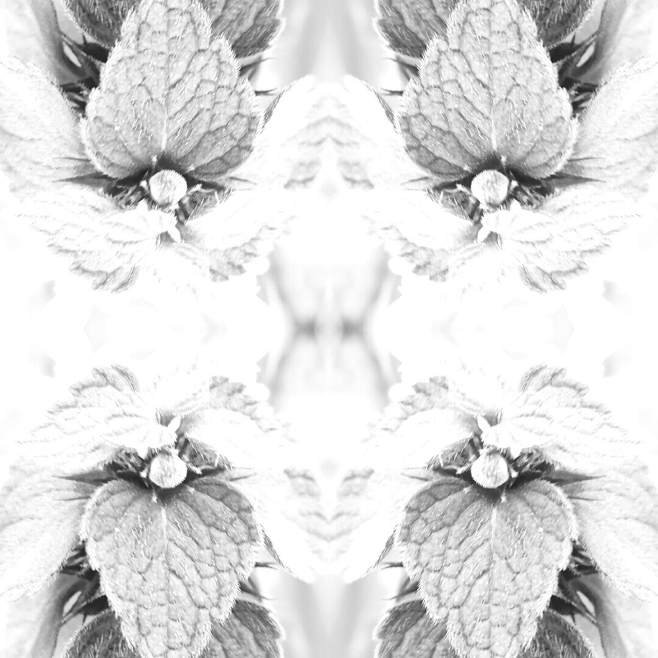 close-up, flower, no people, backgrounds, abstract, full frame, indoors, symmetry, flower head, day