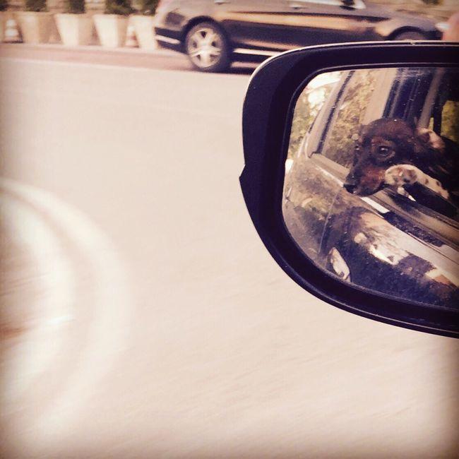 Car Window Mirror Close-up Dogs Of EyeEm Dogslife Dogs Focus On Foreground Sundayselfie