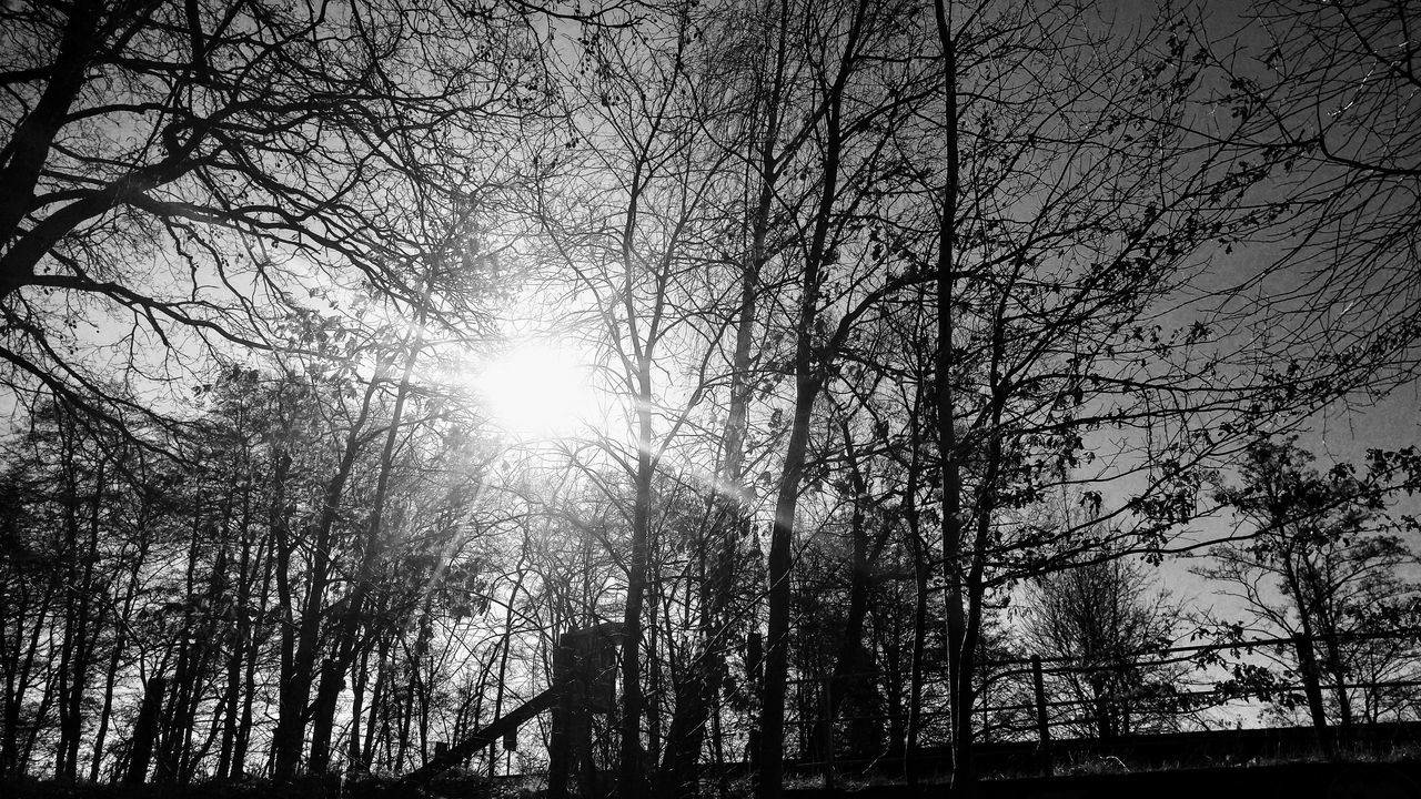 Bare Tree Beauty In Nature Black And White Blackandwhite Branch Forest Low Angle View Nature Nature Nature_collection No People Outdoors Sky Sun Sunbeam Sunlight Tree Tree Trunk