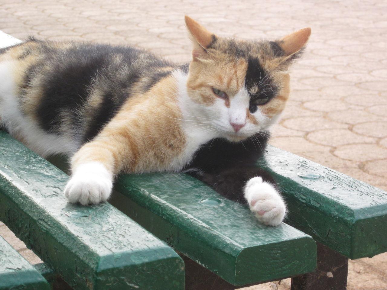 Malta Bank Cat Katze Mixed Color Cat No People One Animal Outdoors Pfoten