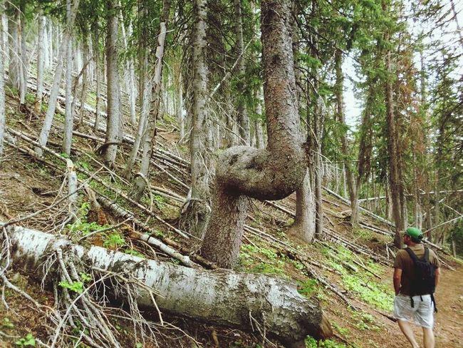 Hiking Trail Walking Around Hugging A Tree Utahbaby