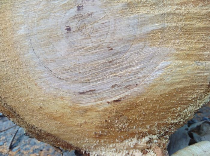 Textured  Close-up Backgrounds Nature Full Frame Day No People Outdoors Tree Tree Ring Sand