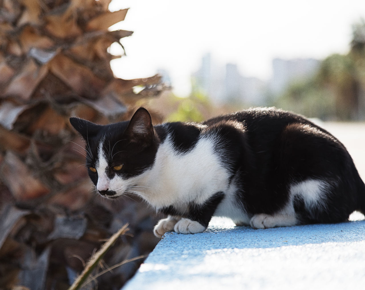 Street Cats Animal Themes Boulder Cats Coastline Domestic Animals Domestic Cat Feline Feline Portraits Mammal Mersin Turkey Nature One Animal Outdoors Pets Rock Formation Street Cats