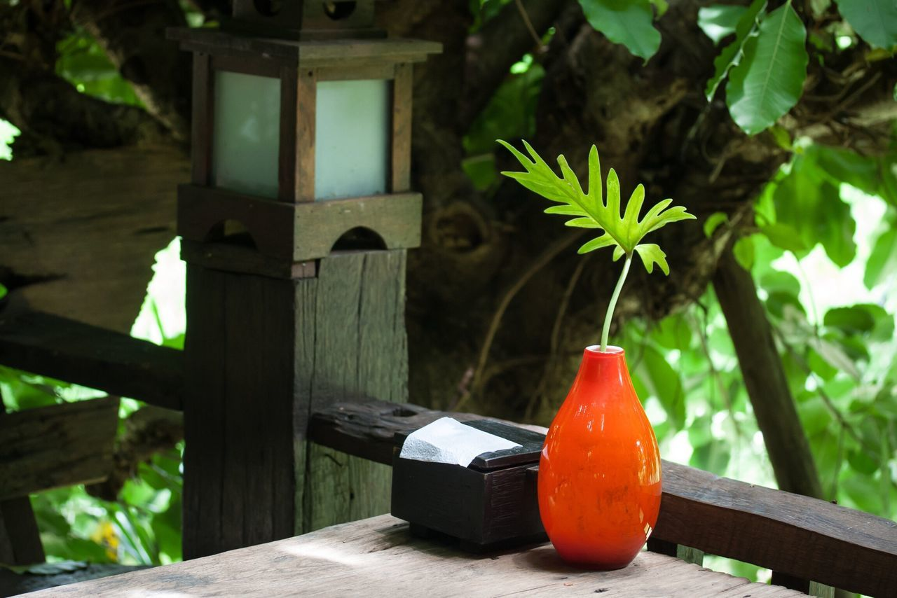 Vase Focus On Foreground Green Color No People Leaf Healthy Eating Growth Close-up Day Freshness Outdoors Nature Birdhouse Orange Orange Color Restaurant Table Glass Glass - Material
