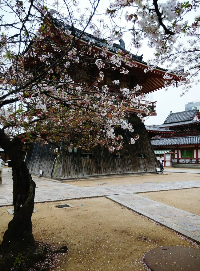 Thousand of year humble and yet beautiful temple Taking Photos Shitennoji Osaka,Japan