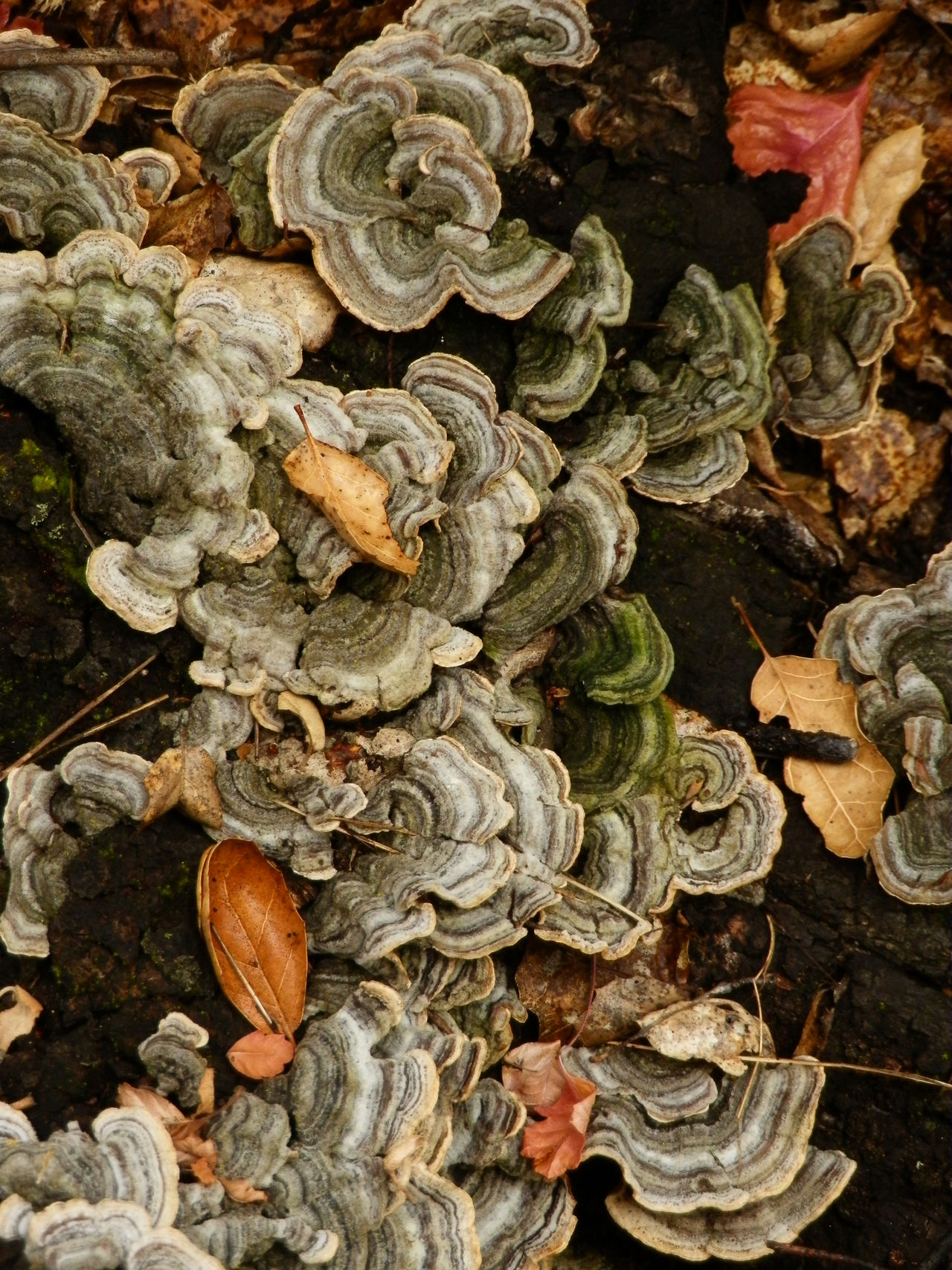 Fungus growing on a dead log. Autumn Colors Close Up Nature Deadwood  Fungus Mushrooms Nature Nature Photography Naturelovers