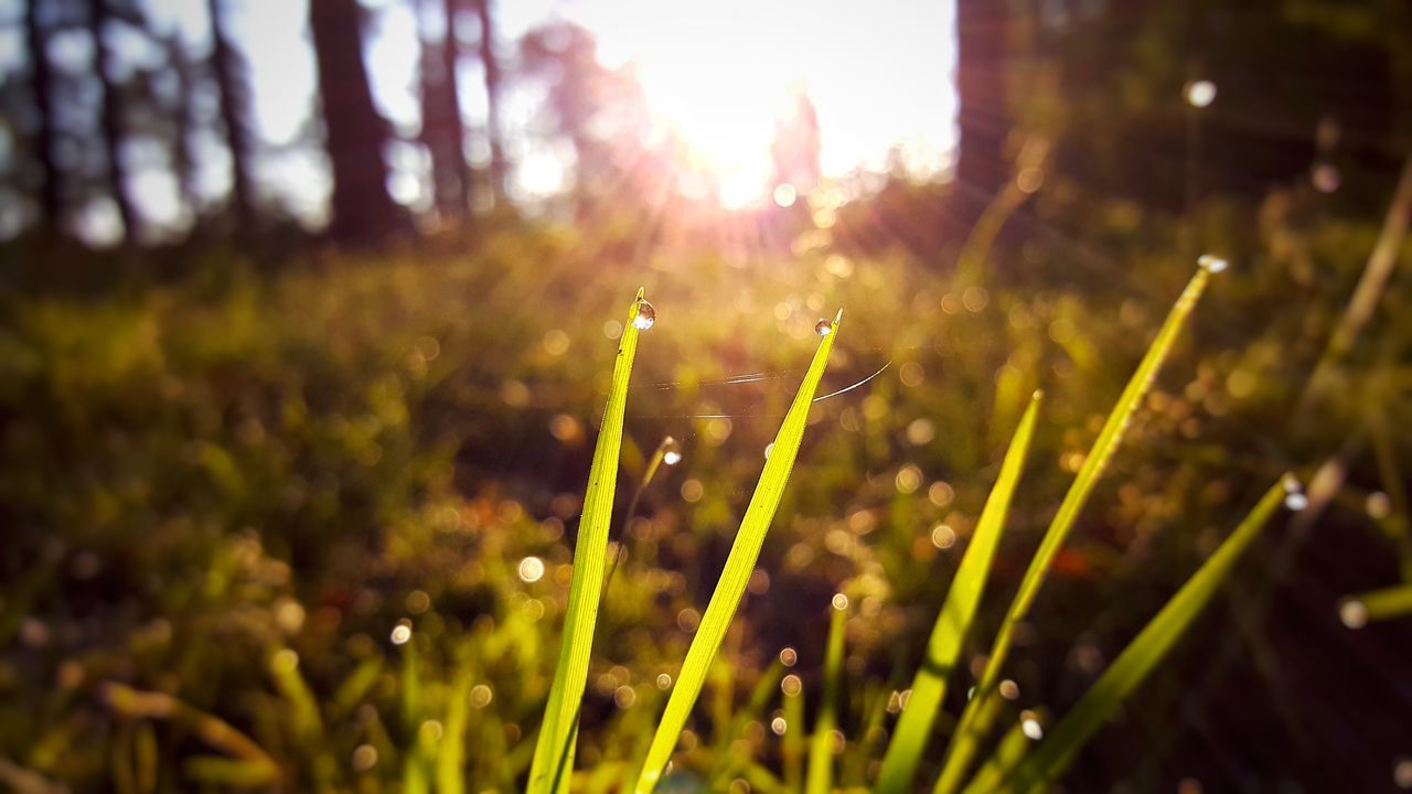 5 AM Beauty In Nature Close-up Day Drops Drops Of Water Field Fragility Freshness Grass Green Color Growth Holiday Morning Nature No People Outdoors Plant Poland Summer Sunbeam Sunlight Tranquil Scene Tranquility