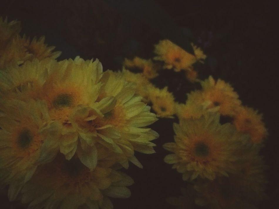 Lo que es tuyo, llega con el tiempo. Y lo que no se va con el. 🌻 Flower Head Beauty In Nature Flower Nature Day Sea Life Beauty Nature