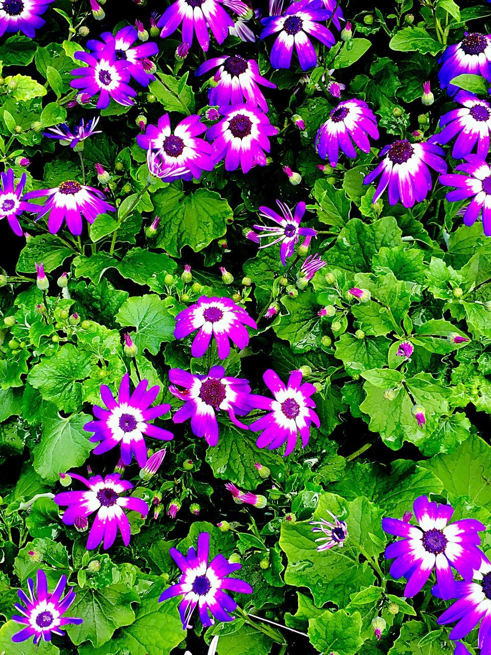 flower, growth, beauty in nature, green color, nature, plant, fragility, outdoors, purple, leaf, day, high angle view, petal, no people, blooming, freshness, flower head