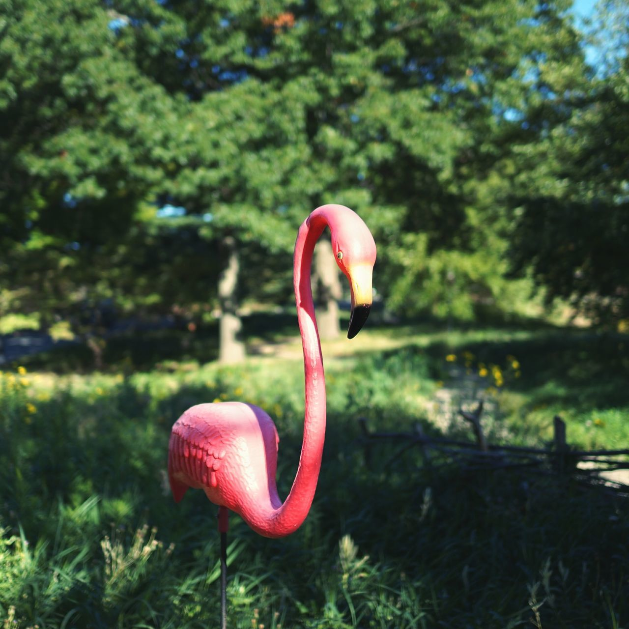 flamingo, one animal, pink color, no people, nature, animals in the wild, beauty in nature, bird, day, focus on foreground, animal themes, close-up, outdoors, red, water, swan