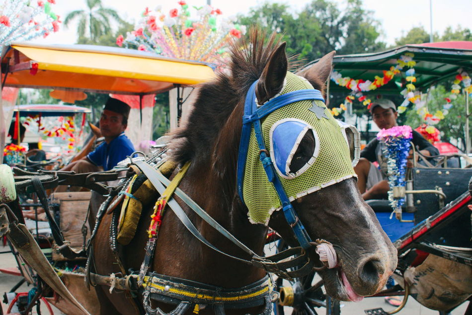 Asian  Cart Celebration Colorful Culture Day Horse Carriage Horse Cart Horse Ride Horses INDONESIA Mode Of Transport Mode Of Transportation Outdoors Toys Traditional Working Horse