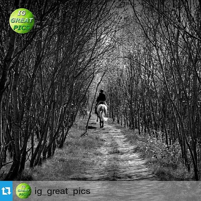 """Thankyou so much @ig_great_pics for choosing my photo to appear on your wonderful page, i really appreciate it being a feature of yours 😊 kind regards my friend 👍 ・・・ May 02, 2015 • 💥ⓟⓡⓞⓤⓓⓛⓨ ⓟⓡⓔⓢⓔⓝⓣⓢ💥 ================================= FEATURED: Blackandwhite PLACE: Near Allerton Bywater - UK PHOTO BY:  @amatuer_mobile_photography  Congratulations !! 🌟👏🌟 Thanks for sharing with us this great pic!! Please IG friends show your support by visiting their wonderful gallery !! 👍 ================================= 📌 No matter the quantity but the quality ➡ Follow @ig_great_pics®  Tag your photos with Ig_great_pics ⛔ Photos must be your own ⛔ ================================= 📝 """"Photography is a tool for dealing with things that everybody knows, but nobody pays attention to"""" (Emmet Gowing) ================================= Ig_great_pics® Monochromatic Noirlovers Road_lovers Super_photoeditz Bnw_fanatics Bnwstyles_gf Snap_bnw Fabshots Nature_wizards Bnwoftheday Beautiful Absolute_shotz Ig_great_pics_bnw Gp_amatuer_mobile_photography Thebest_capture Shotsbyyou Top_bnw World_bnw Click_n_share Greatest_shots Landscape pathway bwbeauty ig_united_kingdom loves_united_kingdom shadows =================================  PLEASE !! Don't follow to unfollow  ================================== • • 👇"""