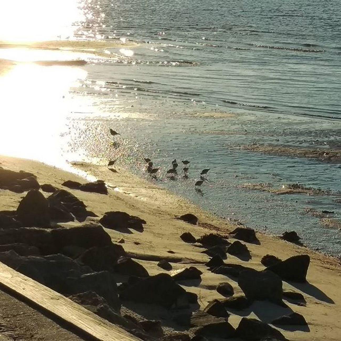 Birdsonthewater Sunreflection LoveFl Emeraldcoast Emeraldcoasting HTCOneM9 Htconelife Oneography 20 .7mp @htc @HTCUSA @HTC_UK @HTCelevate @HTCMEA @HTC_IN @HTCIreland @HTCCanada @HTCMalaysia @htcsouthasia @htcfrance TeamHTC @sharealittlesunshine @pureflorida Beachlife