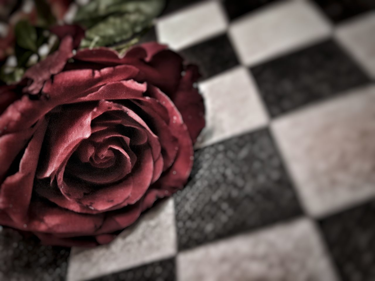 Red Rose Valentine's Day  Amour Eternel Restaurant Tranquility Loveit Amoregrande Tiamoimmensamente Nature_perfection Redonblackandwhite No People Day PhonePhotography Mylove Indoors  Cincin EyeEmNewHere EyeEmNewHere EyeEmNewHere EyeEmNewHere EyeEmNewHere EyeEmNewHere EyeEmNewHere EyeEmNewHere EyeEmNewHere EyeEmNewHere EyeEmNewHere