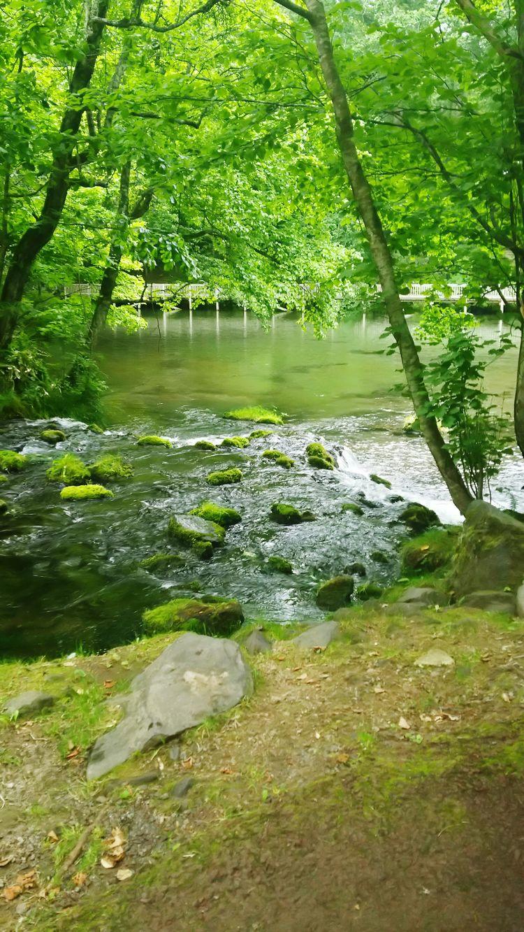 EyeEm Enjoying Life Delicious Water Pond Spring Water Warter Outdoors Relaxing Park Grass Hokkaido 苔 Japan Green Color 湧き水 名水 京極