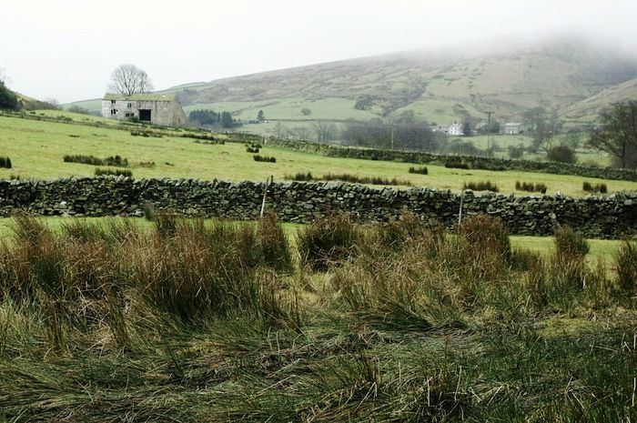 Landscape Rural Scene Nature Large Group Of Animals Tree Agriculture No People Outdoors Day Animal Themes Witches Foggy Landscapes Pendle Hill Winter Misty Days Misty Lush - Description Scenics Tranquil Scene Tranquility Nature Tree Green Color Agriculture