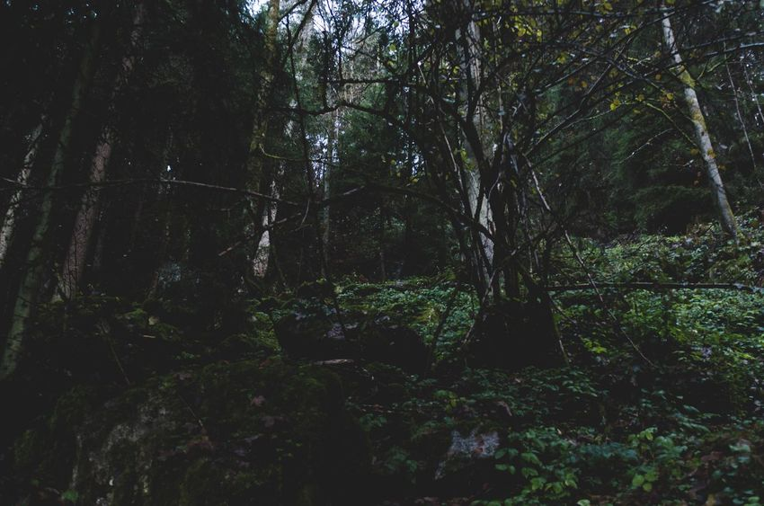 explore /: black forest 2016 Tree Forest Nature Tranquility Growth Tranquil Scene WoodLand Beauty In Nature No People Scenics Outdoors Dense Environment Woods Day Glade Tree Area