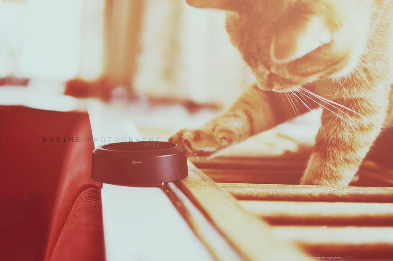 Cat Nikon Narime Kitten