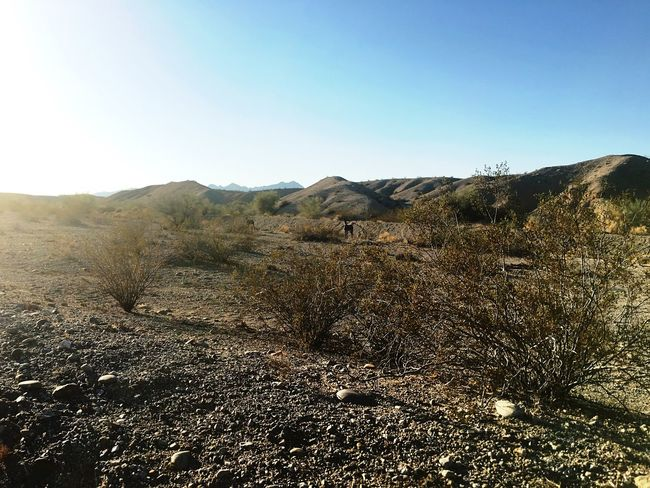 Taking Photos Desert Landscape Donkey Hidden In Plain Sight