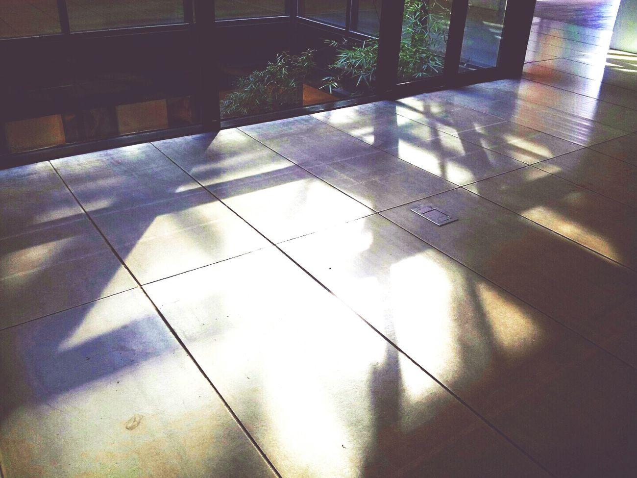 빛 온실 미술관 유리 투명 몽환 몽롱 무지개 Light Glass Rainbow