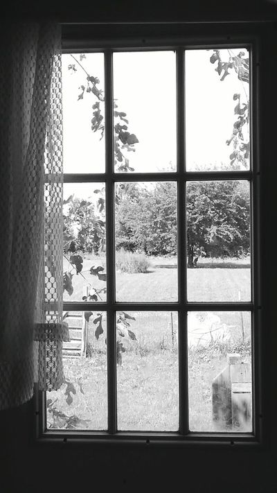 Window Indoors  Glass - Material Home Interior Transparent Tree Plant Window Frame Day Sky Geometric Shape Domestic Life No People Small