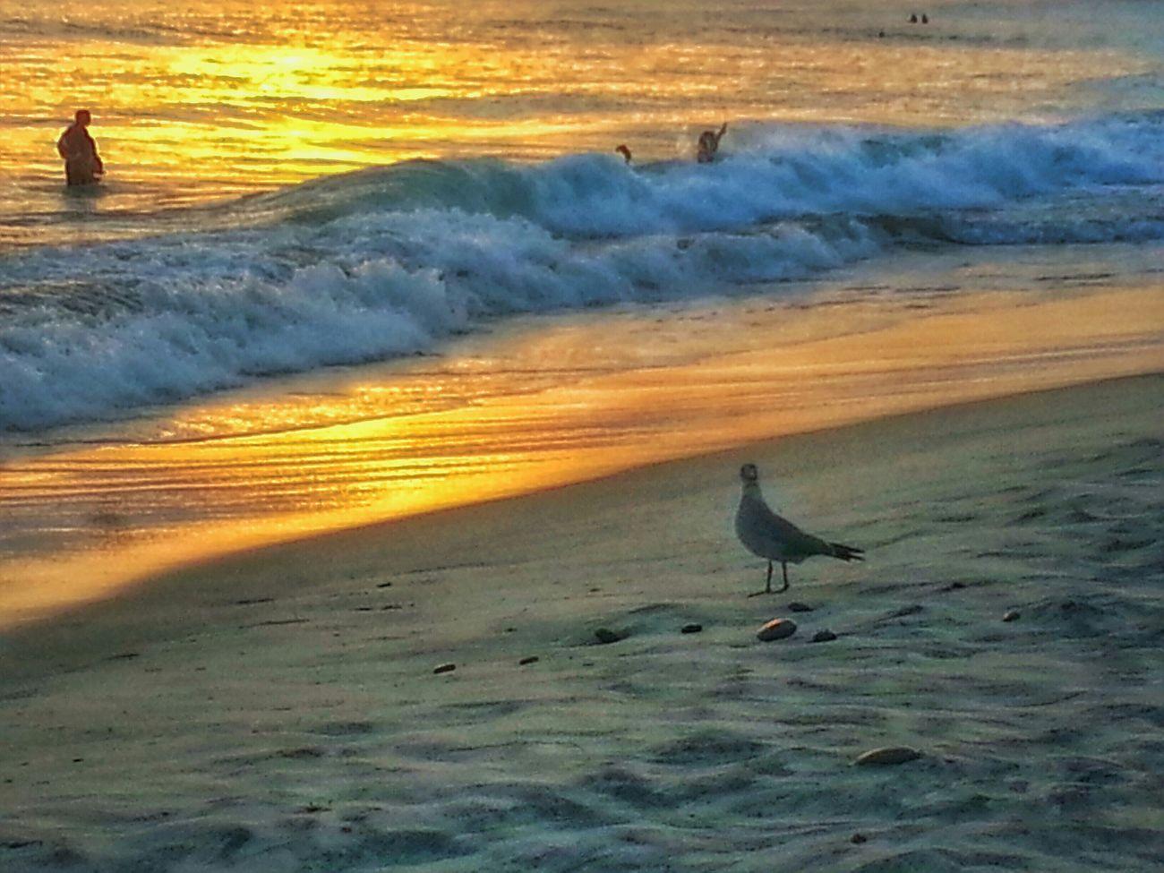 Good night ... photo taken at Oceanside California taken with Galaxynote2 Mobilephotography EyeEm Best Shots - Sunsets + Sunrise Sunset #sun #clouds #skylovers #sky #nature #beautifulinnature #naturalbeauty #photography #landscape Sunsetbeach Beach Photography Sunrise_sunsets_aroundworld
