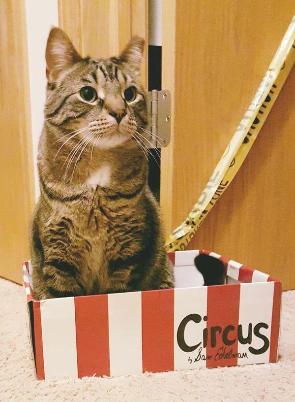 Animals Pets Corner Lolcat Cats Lovehimwithallmyheart Feral