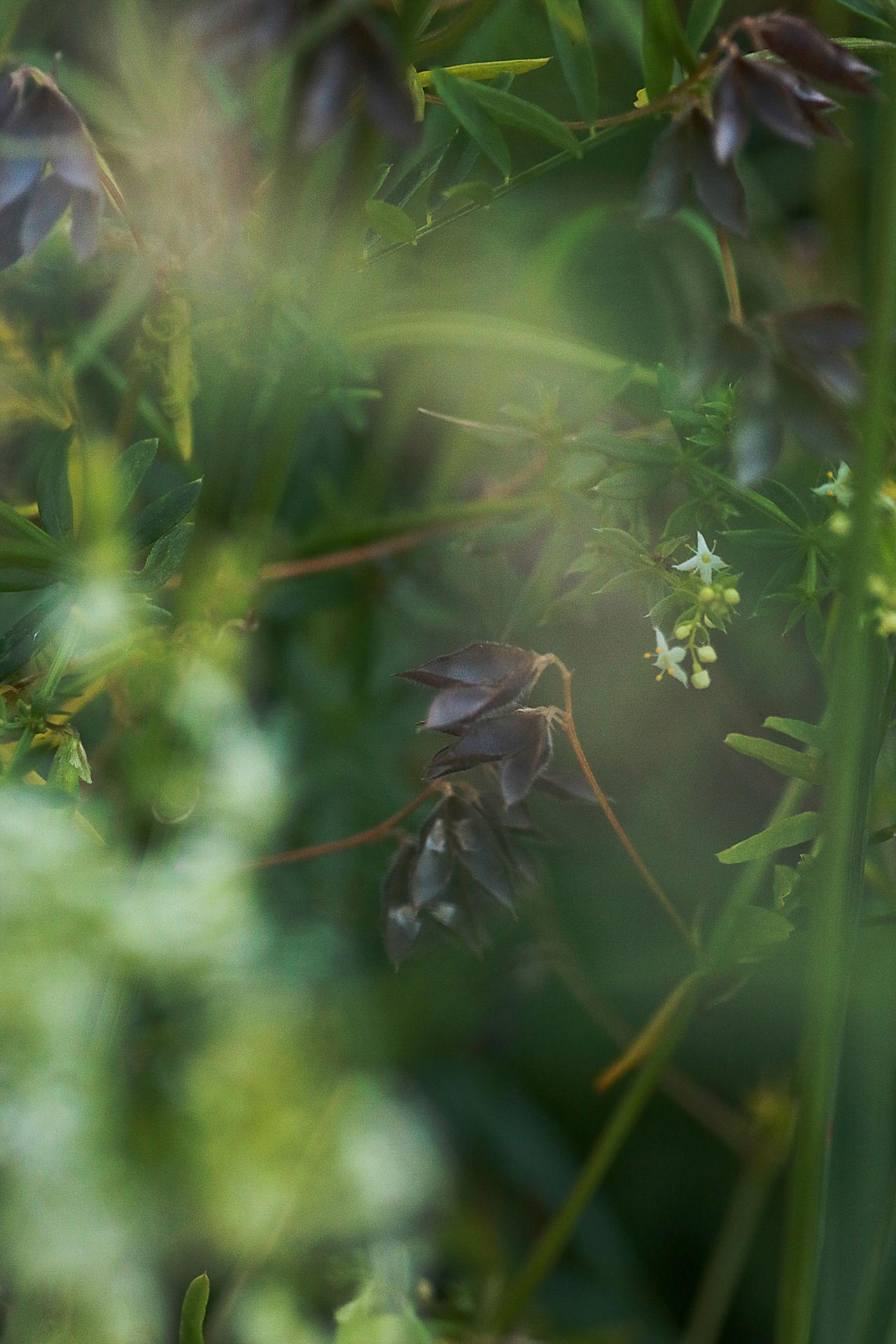 Beauty In Nature Close-up Hidden Beauty Hiddew Macro Photography Nature Plant Secret Shadows