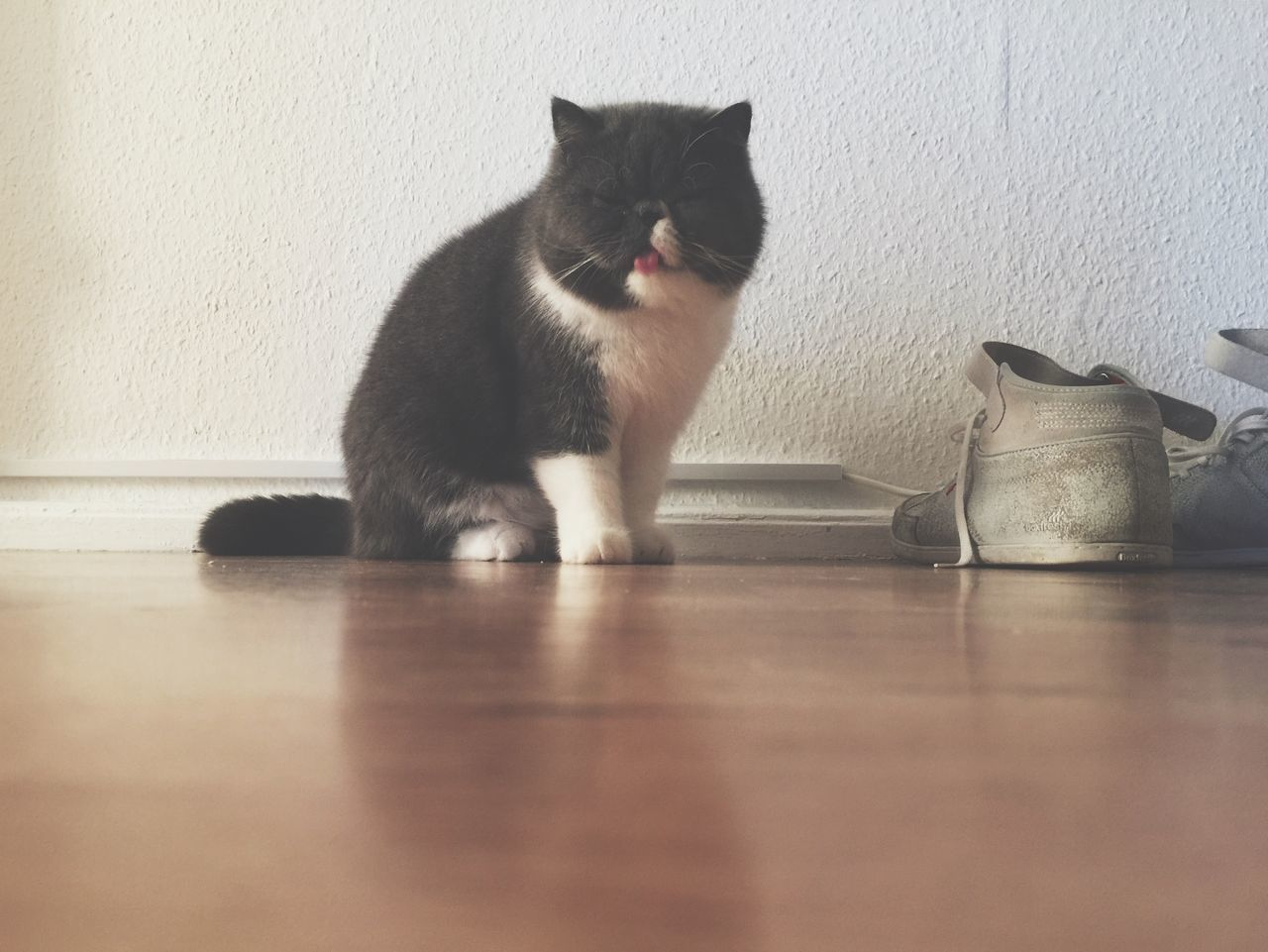 Black Cat Relaxing On Floor By Shoes