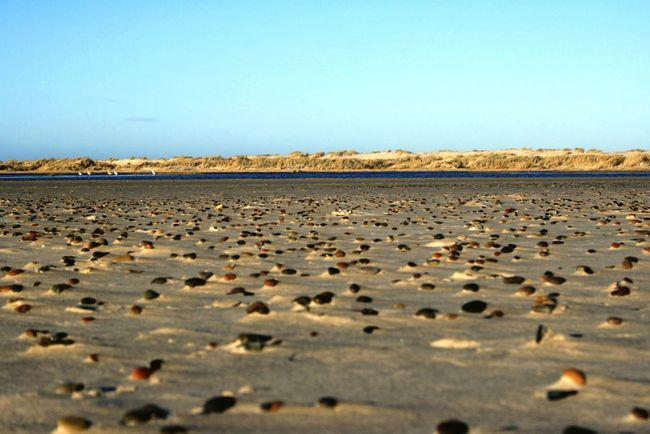 Stoned Beach Life Is A Beach Skagen EyeEm Nature Lover Denmark