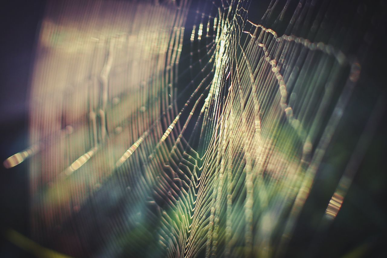 Growth Close-up Plant Focus On Foreground Nature Grass Green Color Beauty In Nature Tranquility Selective Focus Spiderweb Morning Morning Light EyeEm Nature Lover Nature Photography Macro No People Green Color Outdoors Beauty In Nature Nature