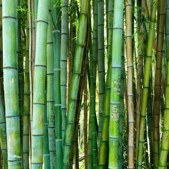 Showcase July Bamboo Green Roadtrip Mountains Destination Unknown Smoky Mountains July 2016 Outdoors Great Smoky Mountains  Cherokee NC