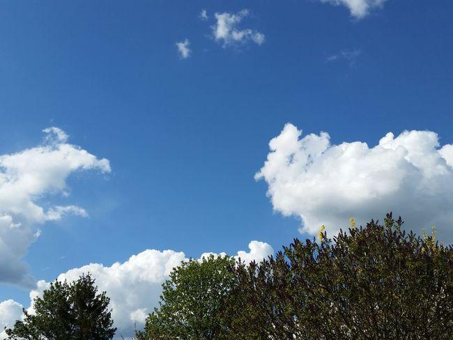 Blue Sky Light Clouds
