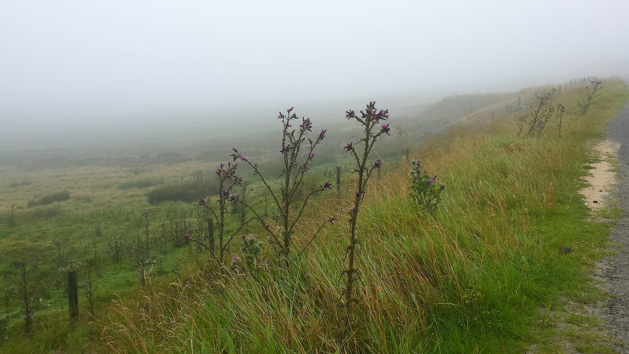 nature, fog, growth, tranquility, tranquil scene, grass, landscape, beauty in nature, plant, scenics, no people, non-urban scene, field, outdoors, day, green color, mountain, sky, tree