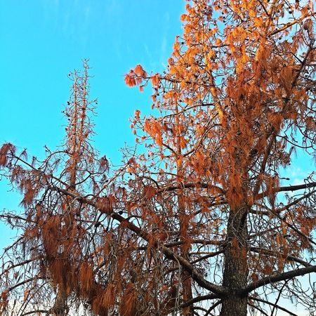 Fall Tree Low Angle View Nature Growth Branch Beauty In Nature Sky Autumn No People Change Outdoors Clear Sky Day Scenics