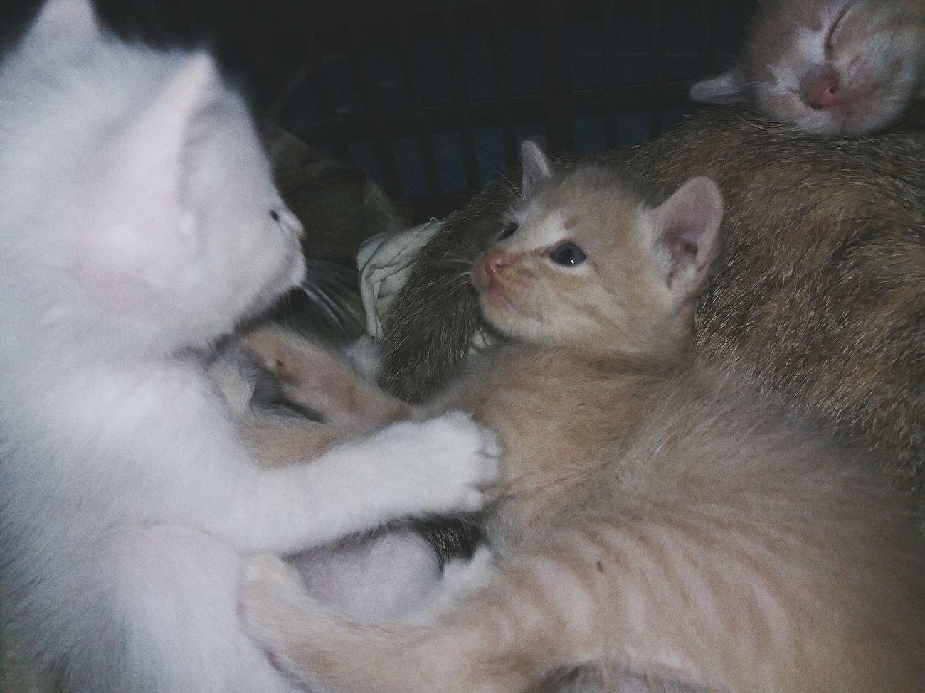 Cat Animal Babycat Animal Themes Domestic Animals