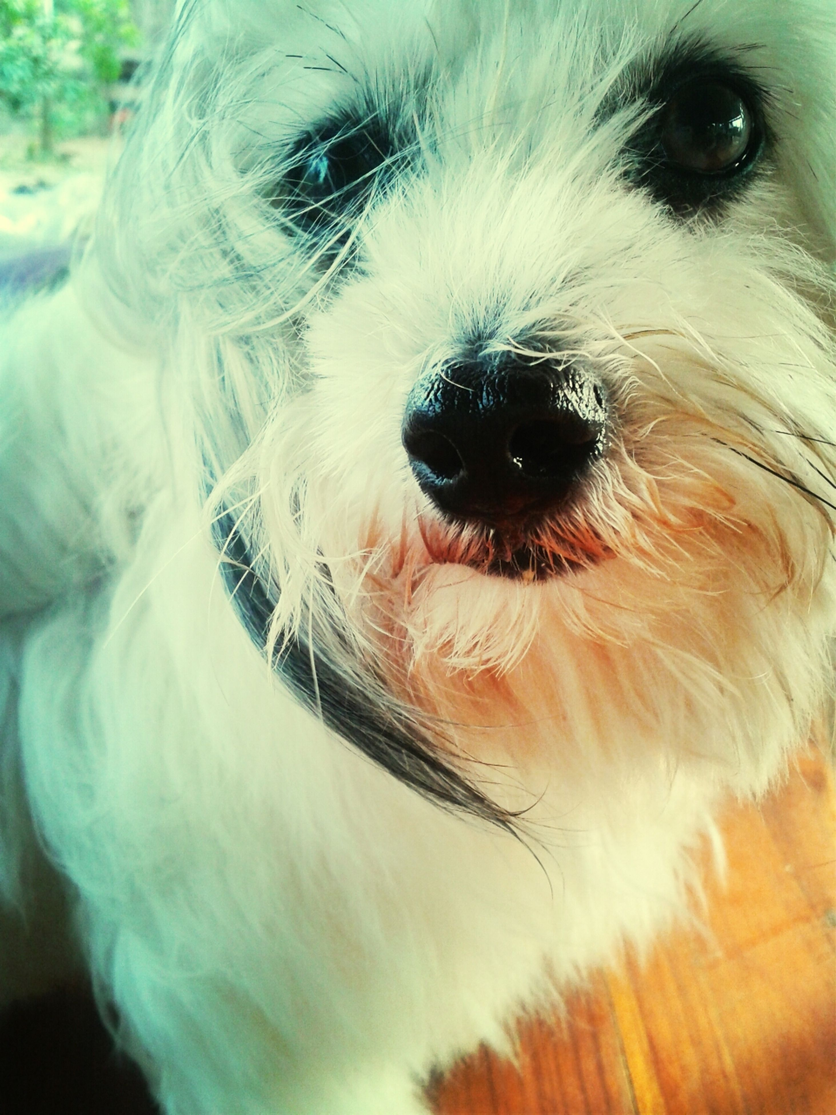 one animal, pets, dog, domestic animals, animal themes, mammal, close-up, animal head, animal body part, animal nose, snout, part of, animal hair, portrait, indoors, animal eye, looking at camera, focus on foreground, pampered pets