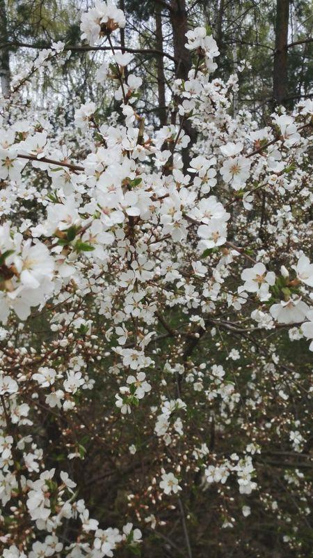 Flowers Blosssom blossoming Spring Relaxing