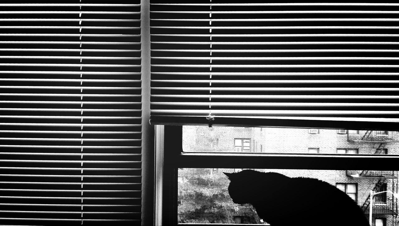 Beautiful stock photos of kitty, Alertness, Animal, Animal Themes, Cat