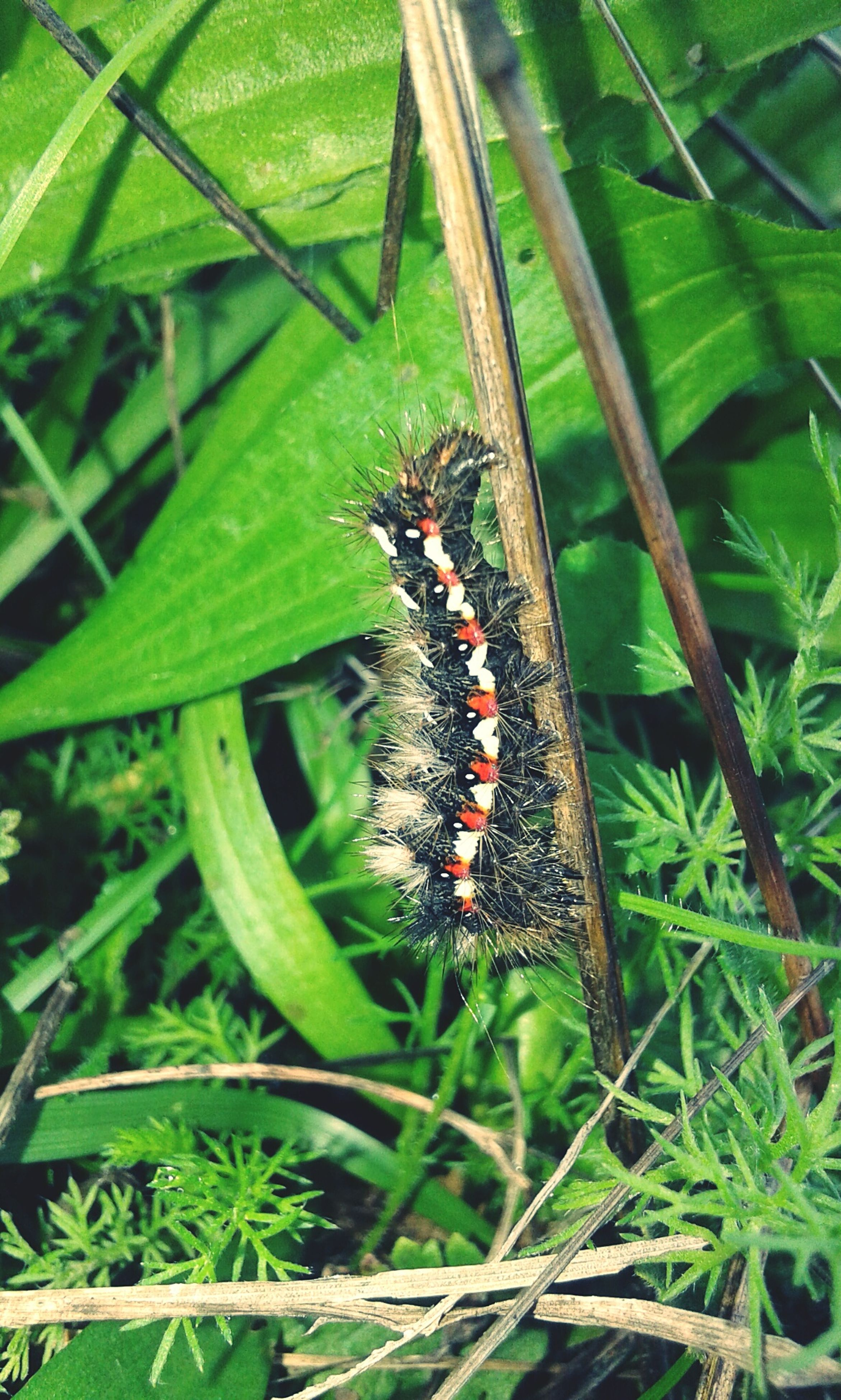 animal themes, one animal, animals in the wild, insect, green color, nature, plant, animal wildlife, no people, growth, outdoors, leaf, close-up, butterfly - insect, day, beauty in nature, grasshopper, mammal