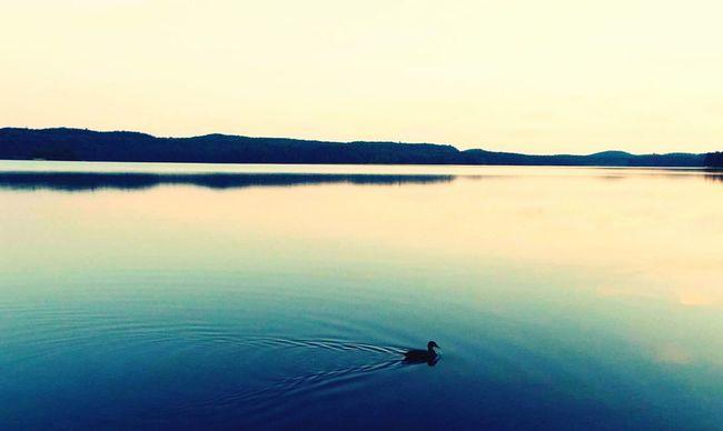 Duck Lake Sunset Algonquinprovincialpark Algonquin Park Water Peace And Quiet Serenity