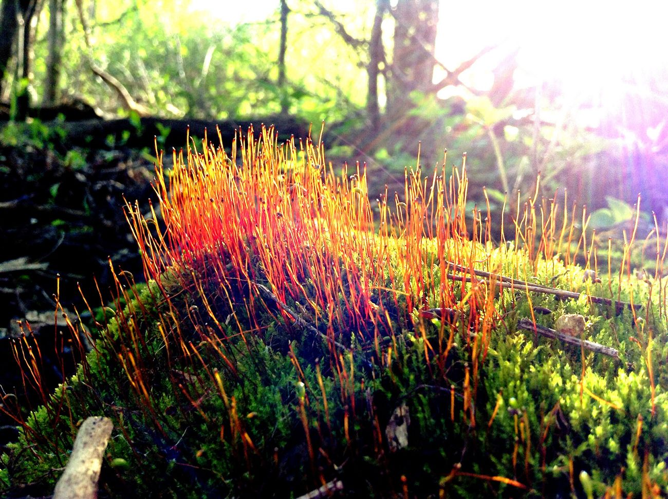 Moss Seeding Moss Forest Photography Forest Floor Foreground Perspective Light Rays Taking Photos EyeEm Nature Lover EyeEm Best Shots Enjoying Life Check This Out Nature Nature Photography The Great Outdoors - 2016 EyeEm Awards