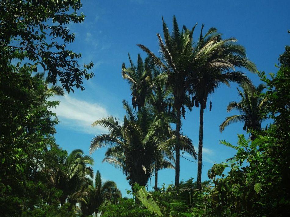 Beautiful stock photos of jamaica, Brazil, Clear, Exotic, Flora