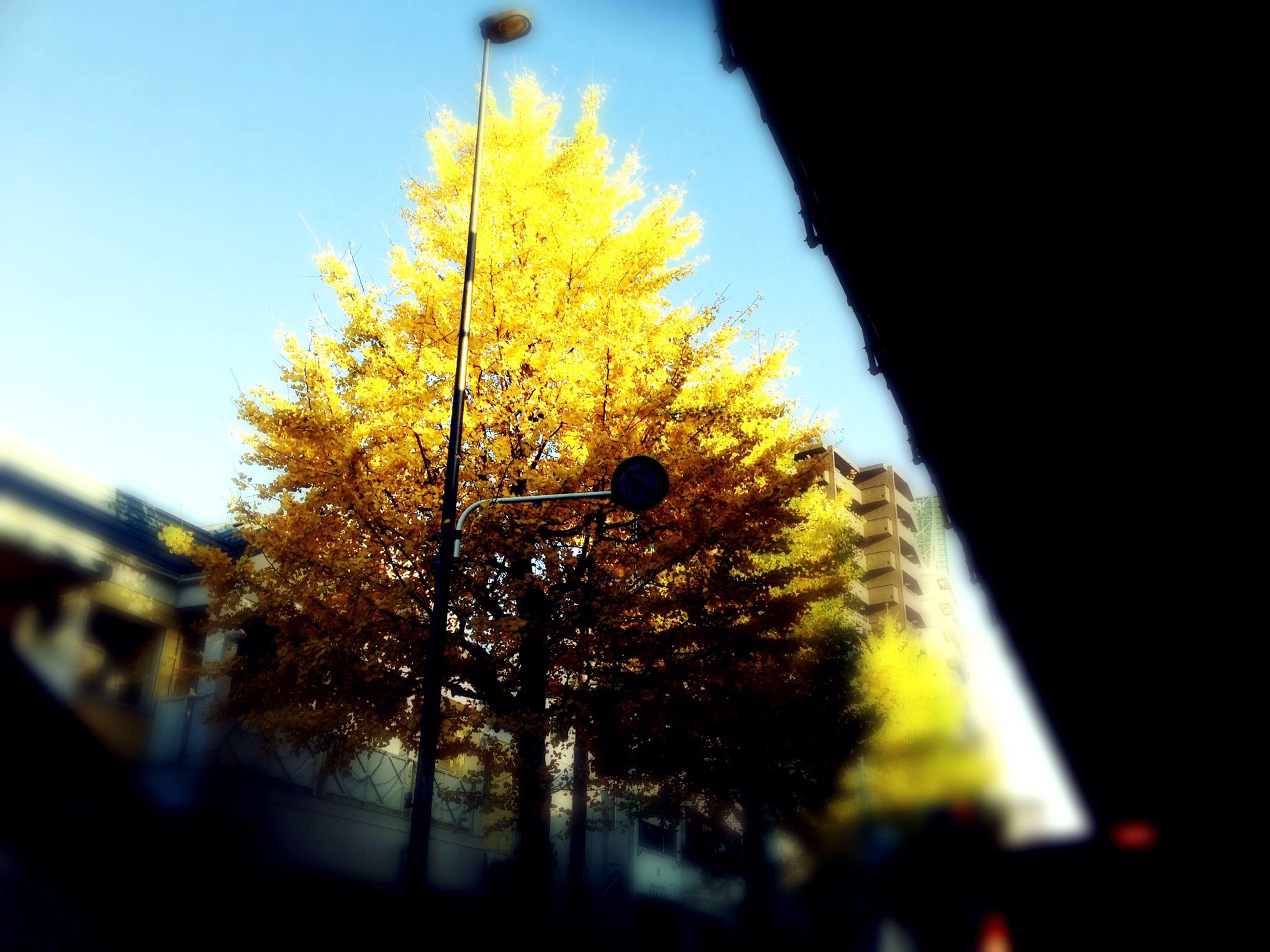 tree, yellow, low angle view, clear sky, branch, autumn, growth, nature, change, beauty in nature, season, sky, leaf, selective focus, close-up, no people, sunlight, outdoors, tranquility, focus on foreground