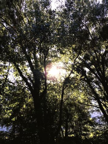 Tree Nature Forest Growth Low Angle View Sunbeam Beauty In Nature Tranquility Sunlight Tranquil Scene Sun Day Branch Scenics No People Outdoors Tree Trunk Sky Valais