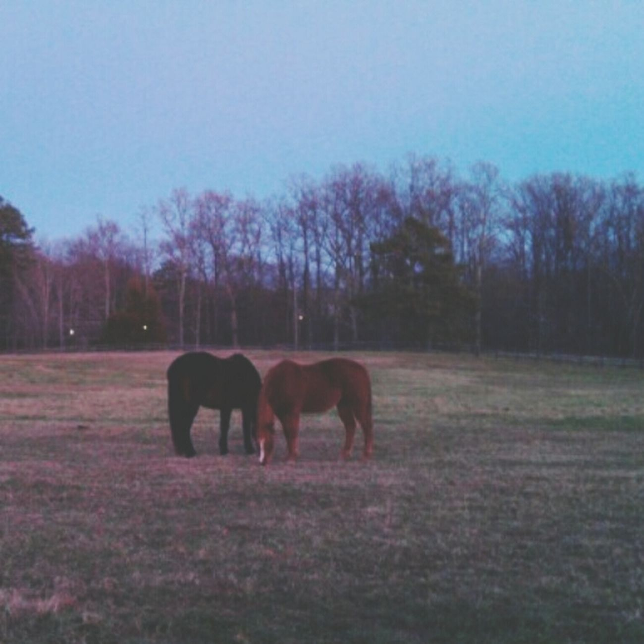 waiting on the day till I find one of my own... Horselover Horses I Love Horses Horse Life