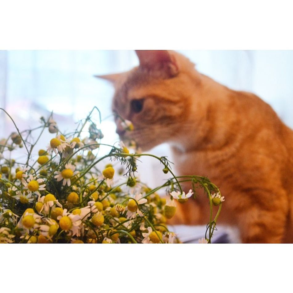 Portrait Of A Friend Hello World Cat Lovers Cute Pets Cat